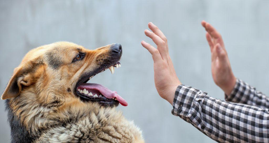Dog Bite Lawyer